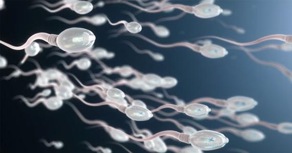 Sperm Mıknatısı (HBA)